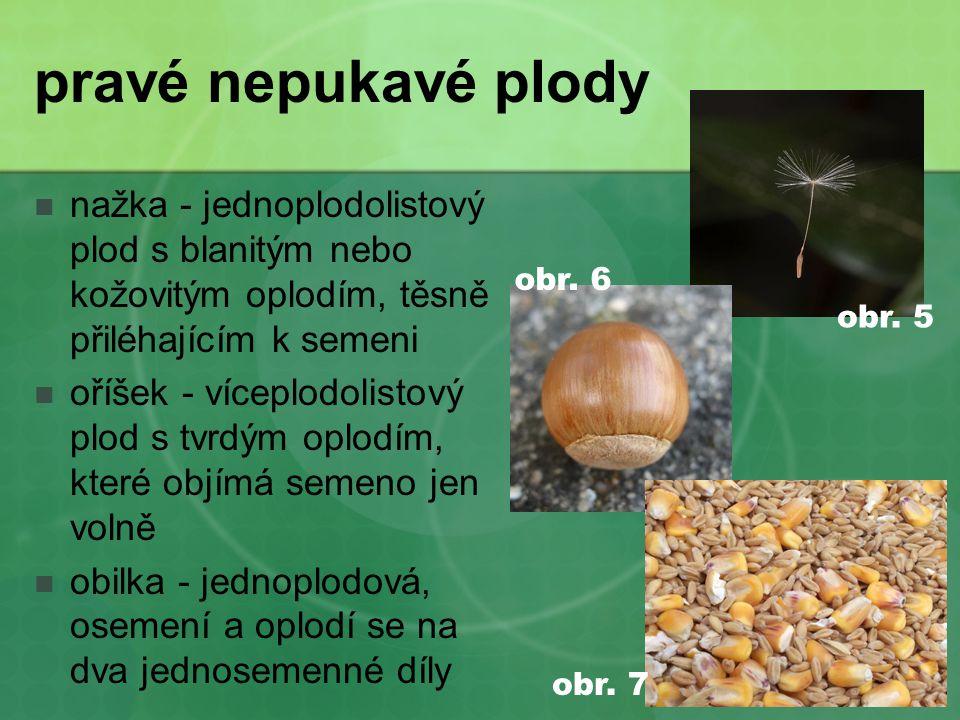 pravé nepukavé plody  nažka - jednoplodolistový plod s blanitým nebo kožovitým oplodím, těsně přiléhajícím k semeni  oříšek - víceplodolistový plod