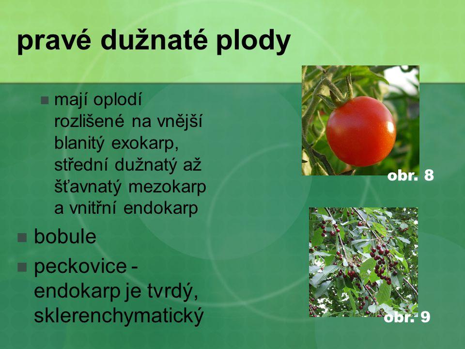 pravé dužnaté plody  mají oplodí rozlišené na vnější blanitý exokarp, střední dužnatý až šťavnatý mezokarp a vnitřní endokarp  bobule  peckovice - endokarp je tvrdý, sklerenchymatický obr.