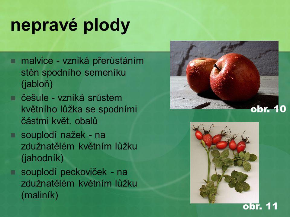 nepravé plody  malvice - vzniká přerůstáním stěn spodního semeníku (jabloň)  češule - vzniká srůstem květního lůžka se spodními částmi květ.