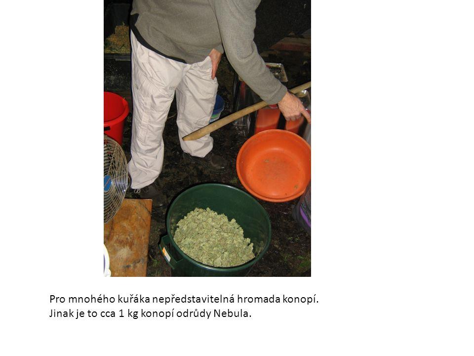Pro mnohého kuřáka nepředstavitelná hromada konopí. Jinak je to cca 1 kg konopí odrůdy Nebula.