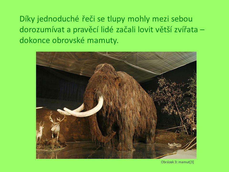 Díky jednoduché řeči se tlupy mohly mezi sebou dorozumívat a pravěcí lidé začali lovit větší zvířata – dokonce obrovské mamuty. Obrázek 3: mamut[3]