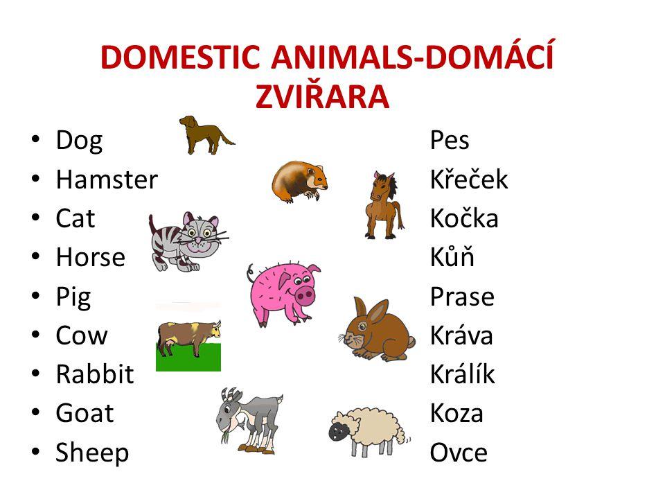 DOMESTIC ANIMALS-DOMÁCÍ ZVIŘARA • DogPes • HamsterKřeček • CatKočka • HorseKůň • PigPrase • CowKráva • RabbitKrálík • GoatKoza • SheepOvce