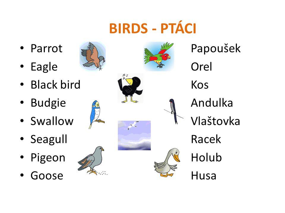 BIRDS - PTÁCI • ParrotPapoušek • EagleOrel • Black birdKos • BudgieAndulka • SwallowVlaštovka • SeagullRacek • PigeonHolub • GooseHusa