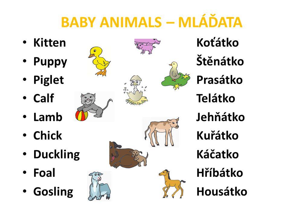 BABY ANIMALS – MLÁĎATA • KittenKoťátko • PuppyŠtěnátko • PigletPrasátko • CalfTelátko • LambJehňátko • ChickKuřátko • DucklingKáčatko • FoalHříbátko •