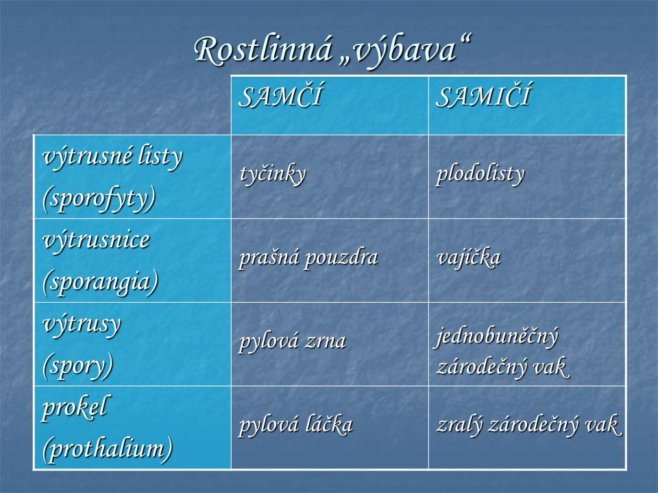  semenné rostliny zahrnují: I.NAHOSEMENNÉ ROSTLINY (Gymnospermae) I.