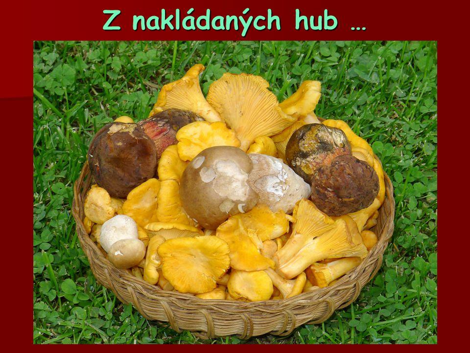 Z nakládaných hub …  Mladé choroše šupinaté jsou šťavnaté a chutné  …