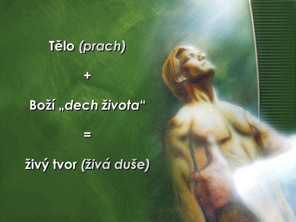 """Tělo (prach) + Boží """" dech života """" = živý tvor (živá duše) Tělo (prach) + Boží """" dech života """" = živý tvor (živá duše)"""