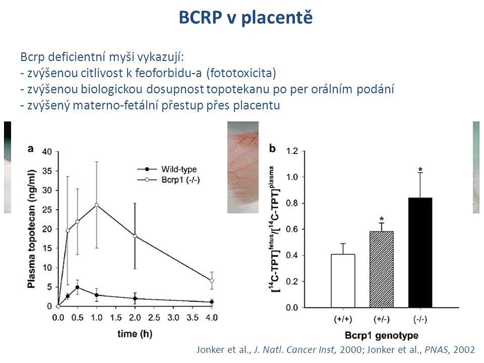 BCRP v placentě Bcrp deficientní myši vykazují: - zvýšenou citlivost k feoforbidu-a (fototoxicita) - zvýšenou biologickou dosupnost topotekanu po per