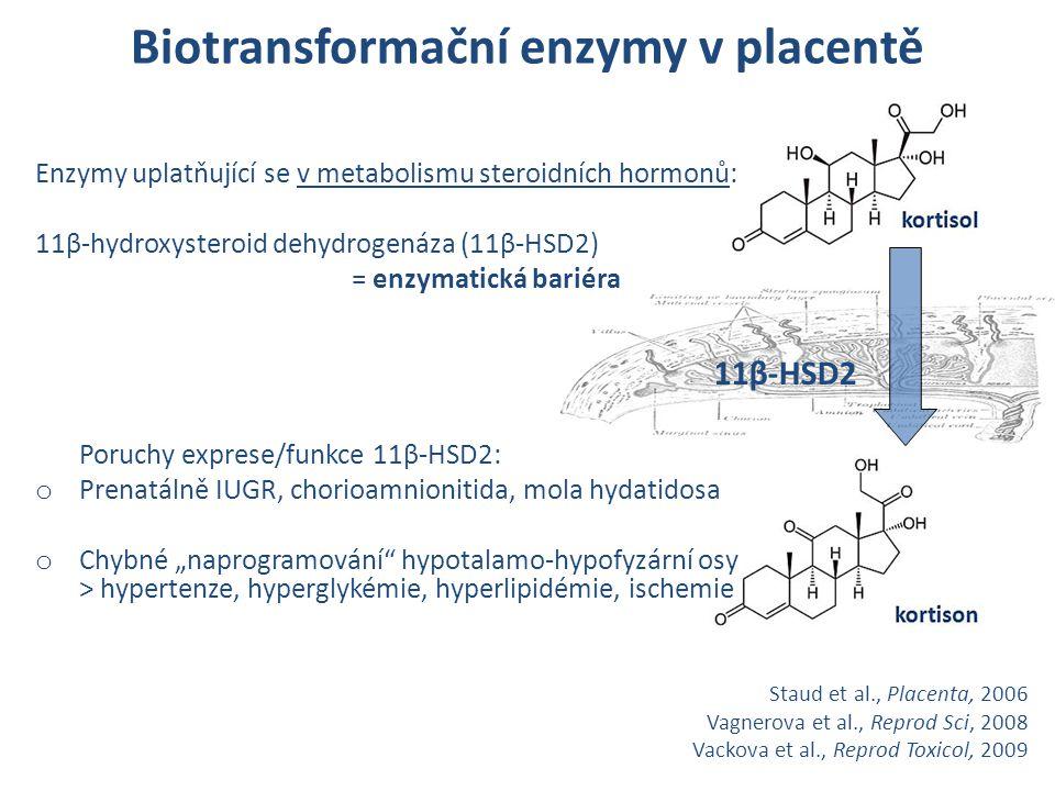 Enzymy uplatňující se v metabolismu steroidních hormonů: 11β-hydroxysteroid dehydrogenáza (11β-HSD2) = enzymatická bariéra Poruchy exprese/funkce 11β-