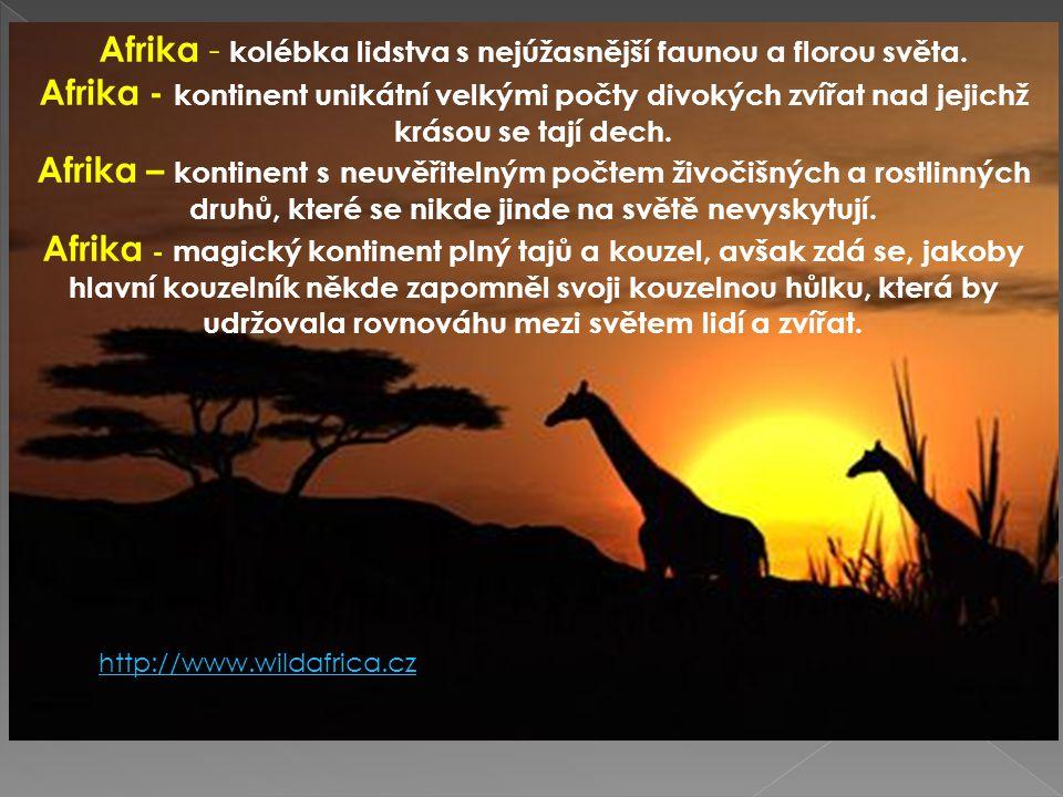 Afrika - kolébka lidstva s nejúžasnější faunou a florou světa. Afrika - kontinent unikátní velkými počty divokých zvířat nad jejichž krásou se tají de