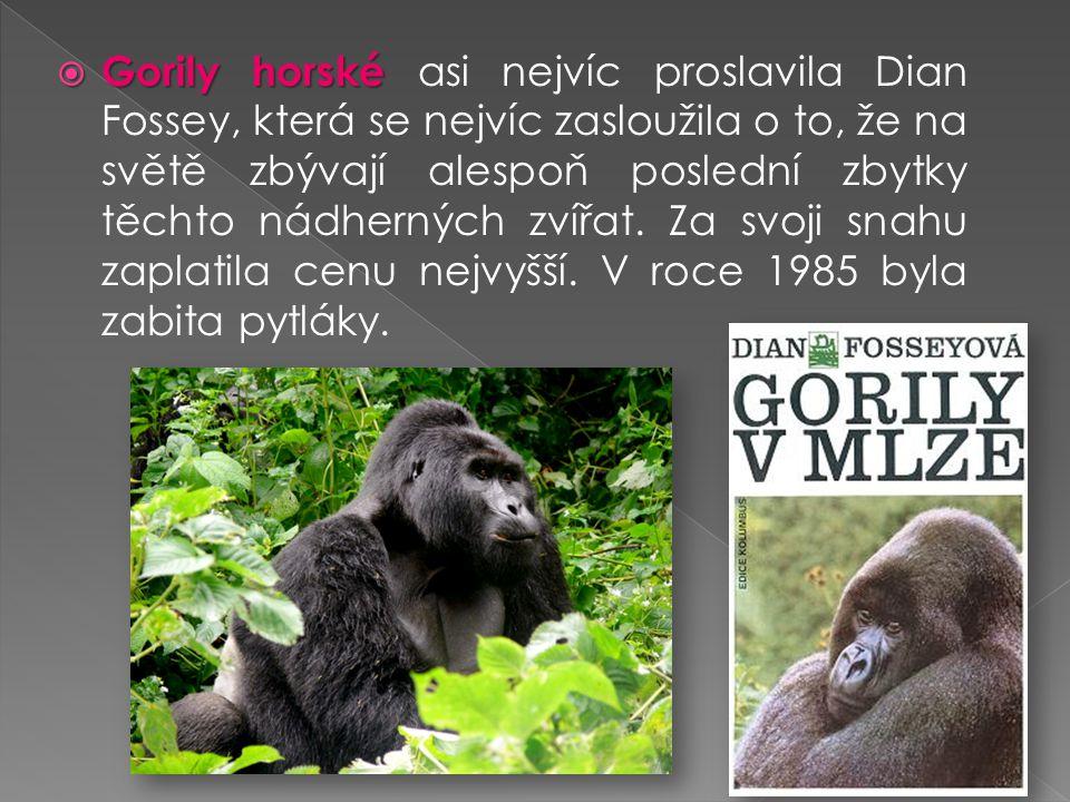  Gorily horské  Gorily horské asi nejvíc proslavila Dian Fossey, která se nejvíc zasloužila o to, že na světě zbývají alespoň poslední zbytky těchto