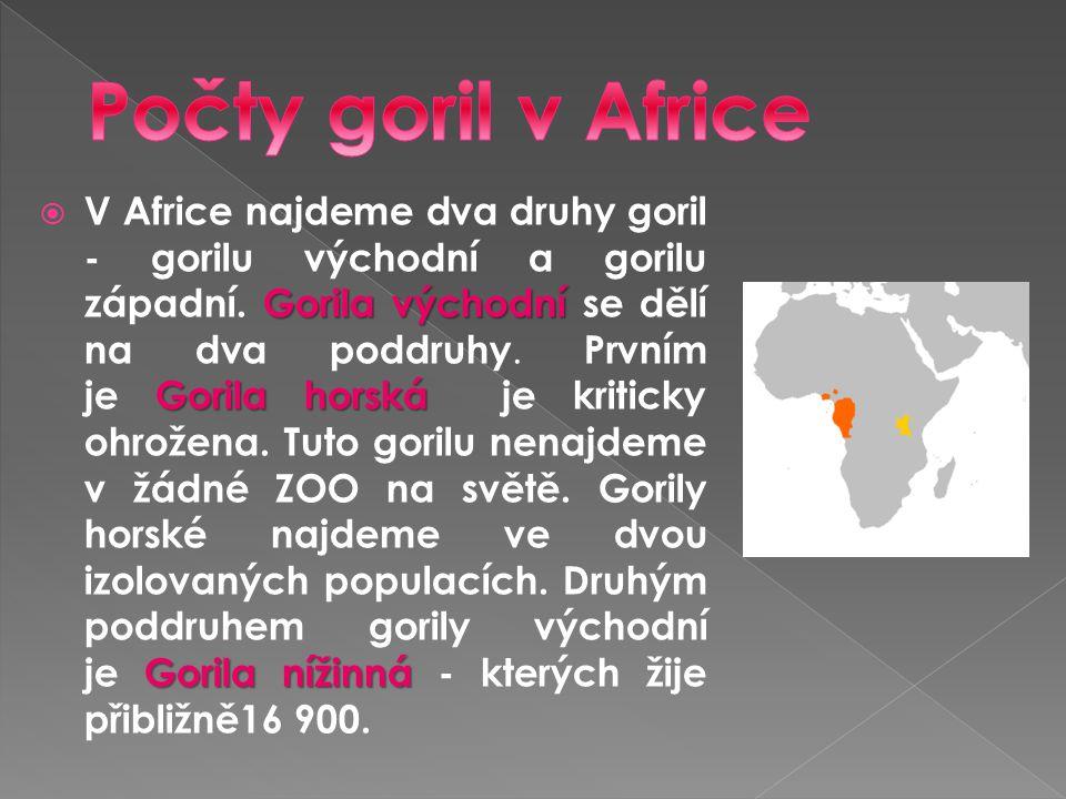 Gorila východní Gorila horská Gorila nížinná  V Africe najdeme dva druhy goril - gorilu východní a gorilu západní. Gorila východní se dělí na dva pod