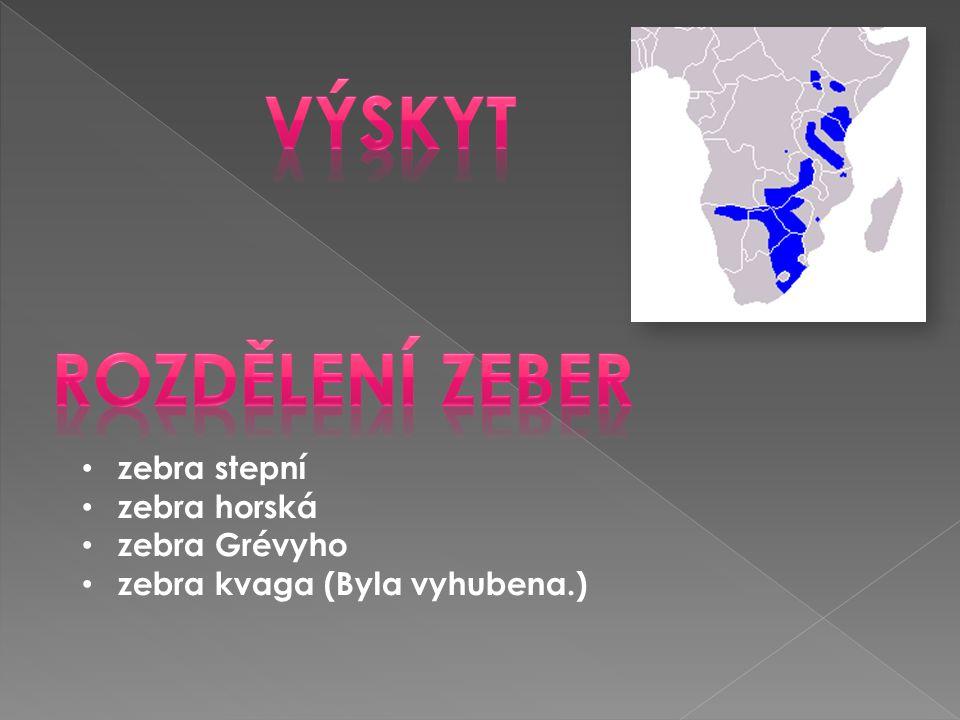 • zebra stepní • zebra horská • zebra Grévyho • zebra kvaga (Byla vyhubena.)