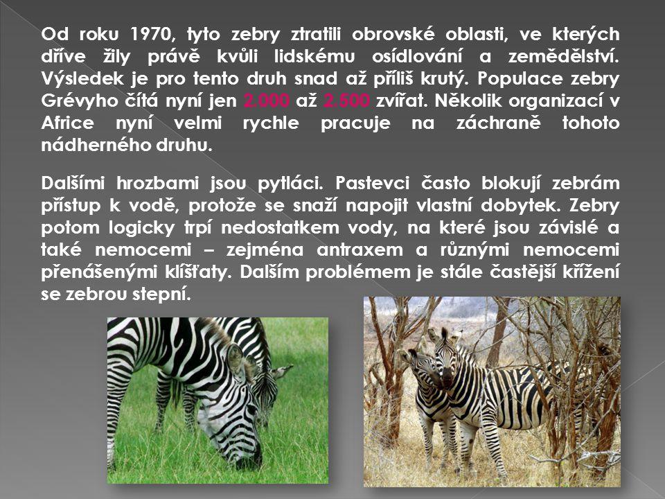 Od roku 1970, tyto zebry ztratili obrovské oblasti, ve kterých dříve žily právě kvůli lidskému osídlování a zemědělství. Výsledek je pro tento druh sn