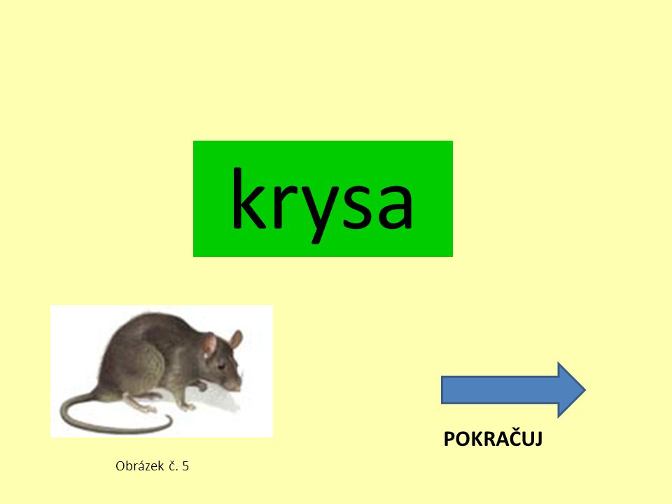 krysa POKRAČUJ Obrázek č. 5