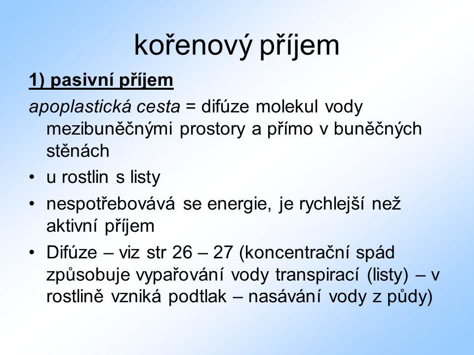 kořenový příjem 1) pasivní příjem apoplastická cesta = difúze molekul vody mezibuněčnými prostory a přímo v buněčných stěnách •u rostlin s listy •nesp