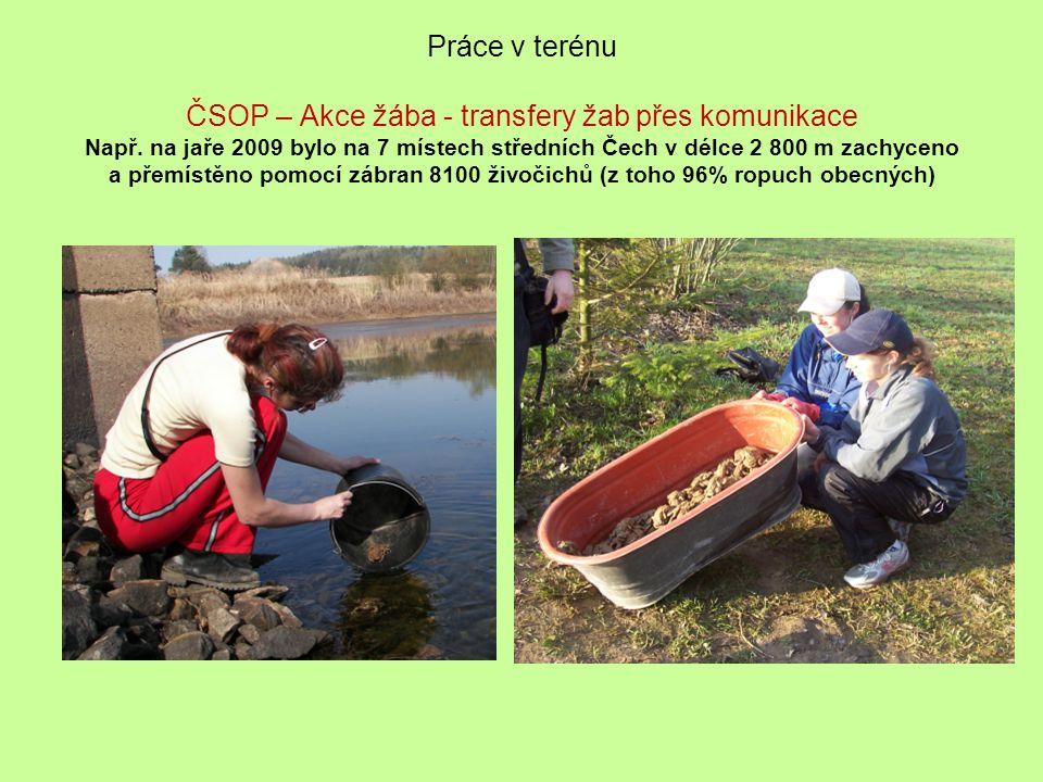 Práce v terénu ČSOP – Akce žába - transfery žab přes komunikace Např. na jaře 2009 bylo na 7 místech středních Čech v délce 2 800 m zachyceno a přemís