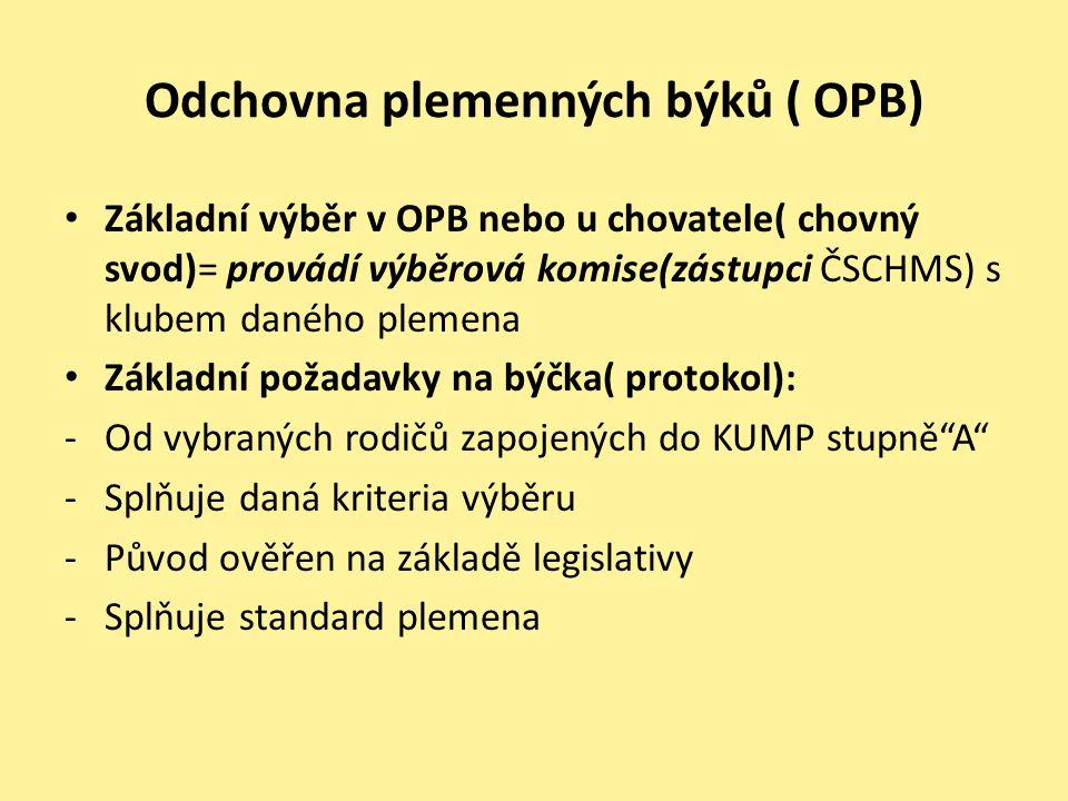 Odchovna plemenných býků ( OPB) • Základní výběr v OPB nebo u chovatele( chovný svod)= provádí výběrová komise(zástupci ČSCHMS) s klubem daného plemen