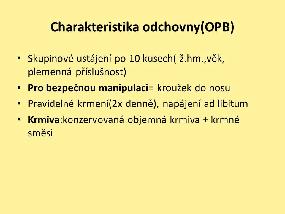 Charakteristika odchovny(OPB) • Skupinové ustájení po 10 kusech( ž.hm.,věk, plemenná příslušnost) • Pro bezpečnou manipulaci= kroužek do nosu • Pravid