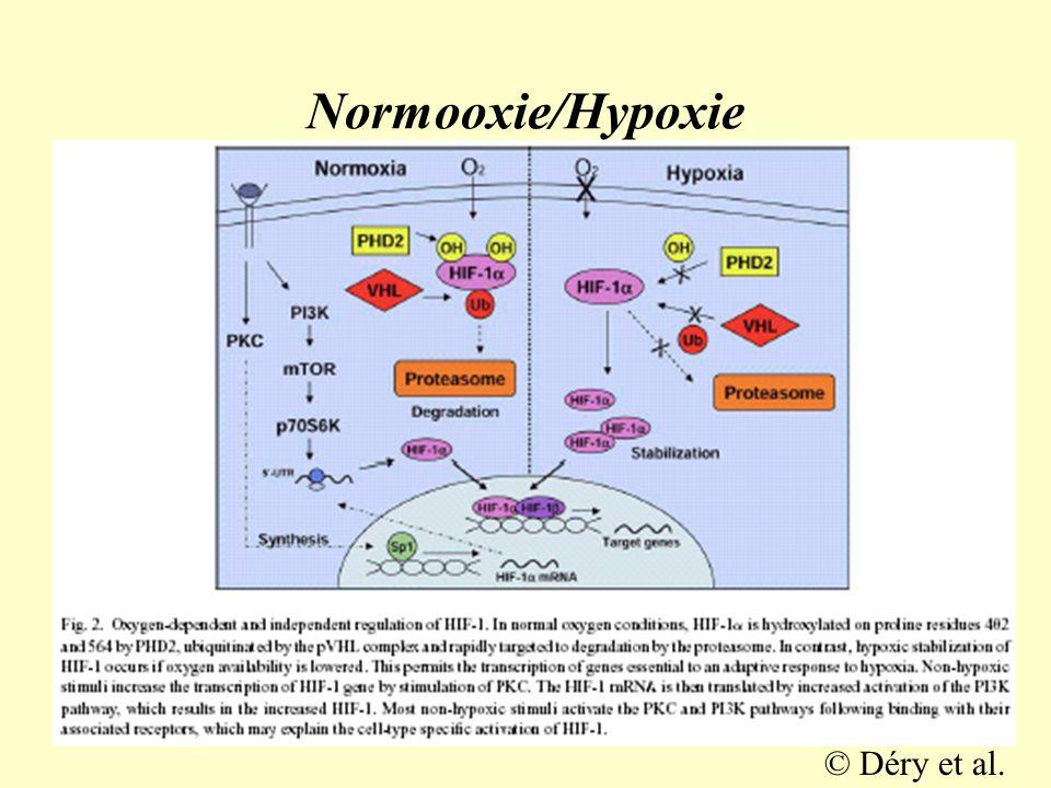 Závěr •EPO je esenciálním faktorem krvetvorby •má nezastupitelné funkce při embryogenezi a organogenezi zejm.