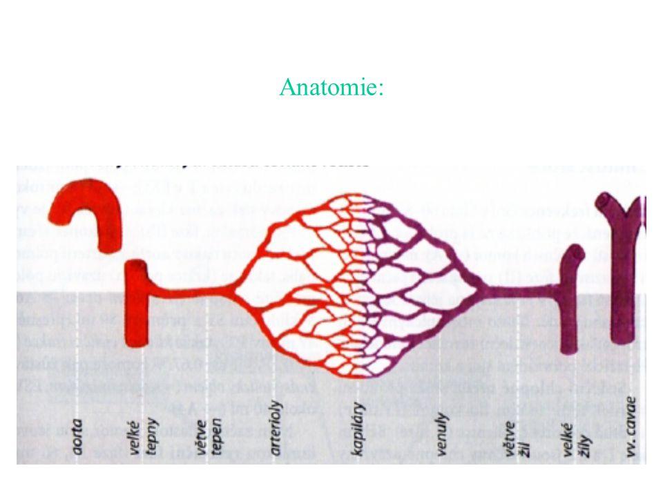 Anatomie: