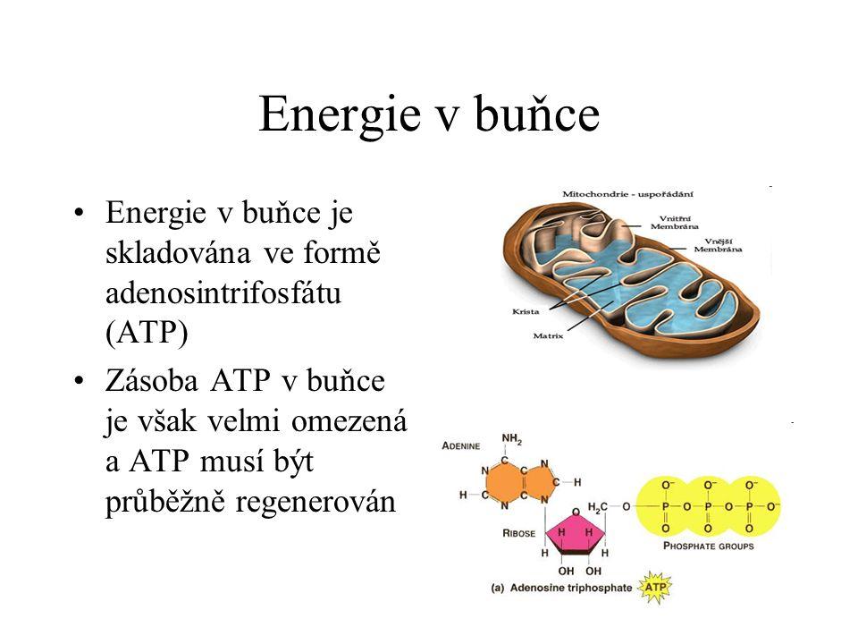 Energie v buňce •Energie v buňce je skladována ve formě adenosintrifosfátu (ATP) •Zásoba ATP v buňce je však velmi omezená a ATP musí být průběžně reg