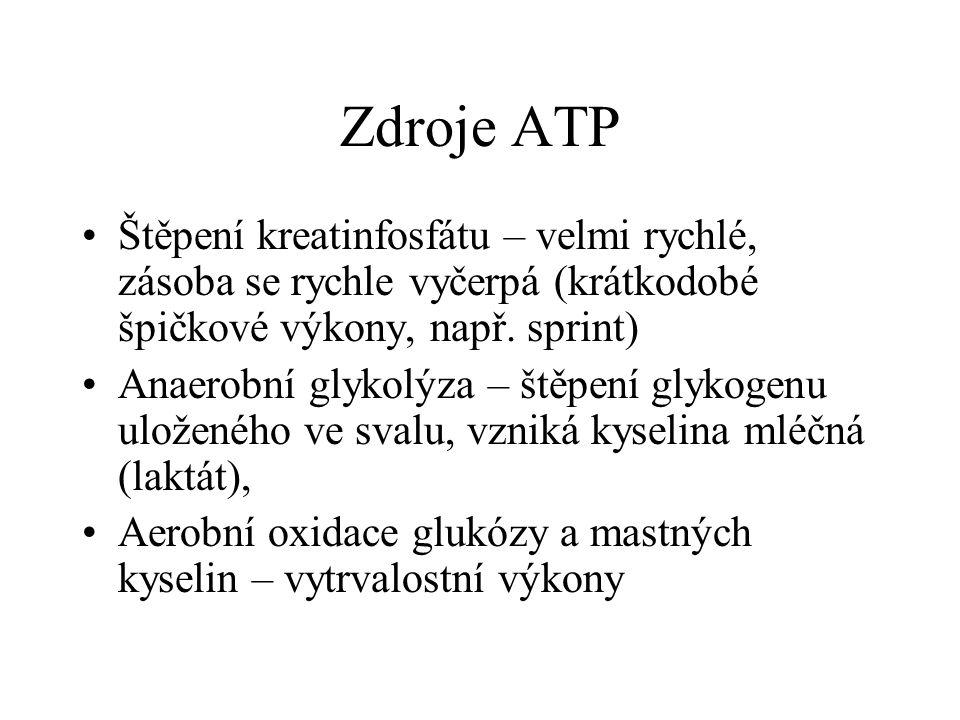 Zdroje ATP •Štěpení kreatinfosfátu – velmi rychlé, zásoba se rychle vyčerpá (krátkodobé špičkové výkony, např. sprint) •Anaerobní glykolýza – štěpení