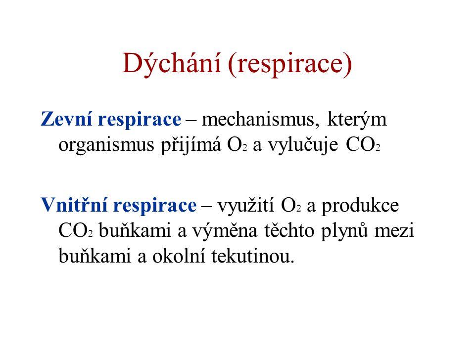Dýchání (respirace) Zevní respirace – mechanismus, kterým organismus přijímá O 2 a vylučuje CO 2 Vnitřní respirace – využití O 2 a produkce CO 2 buňka