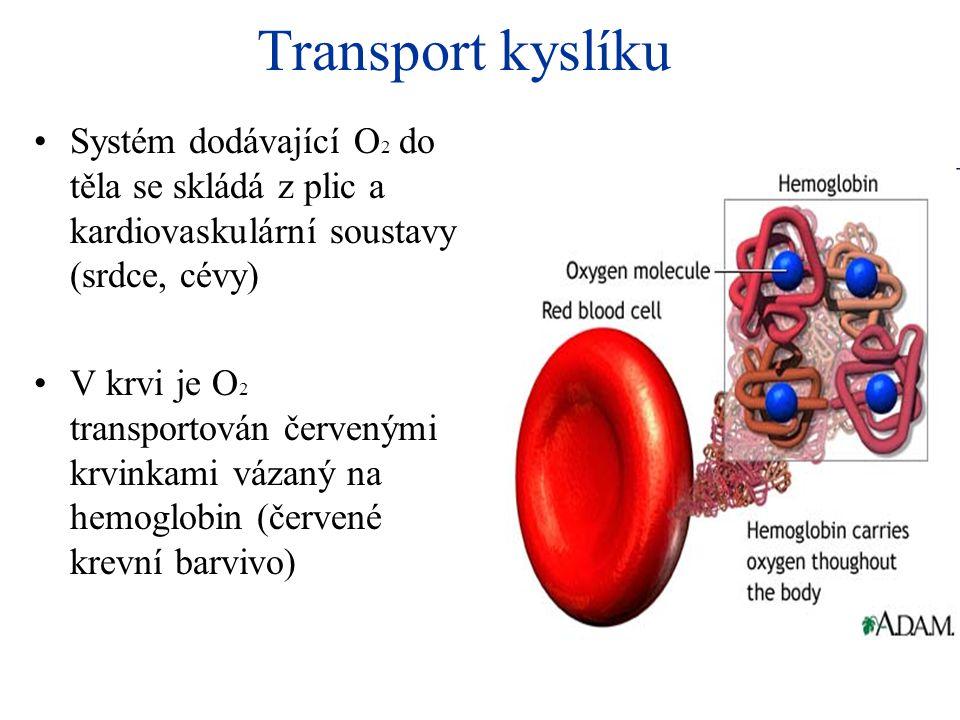 Transport kyslíku •Systém dodávající O 2 do těla se skládá z plic a kardiovaskulární soustavy (srdce, cévy) •V krvi je O 2 transportován červenými krv