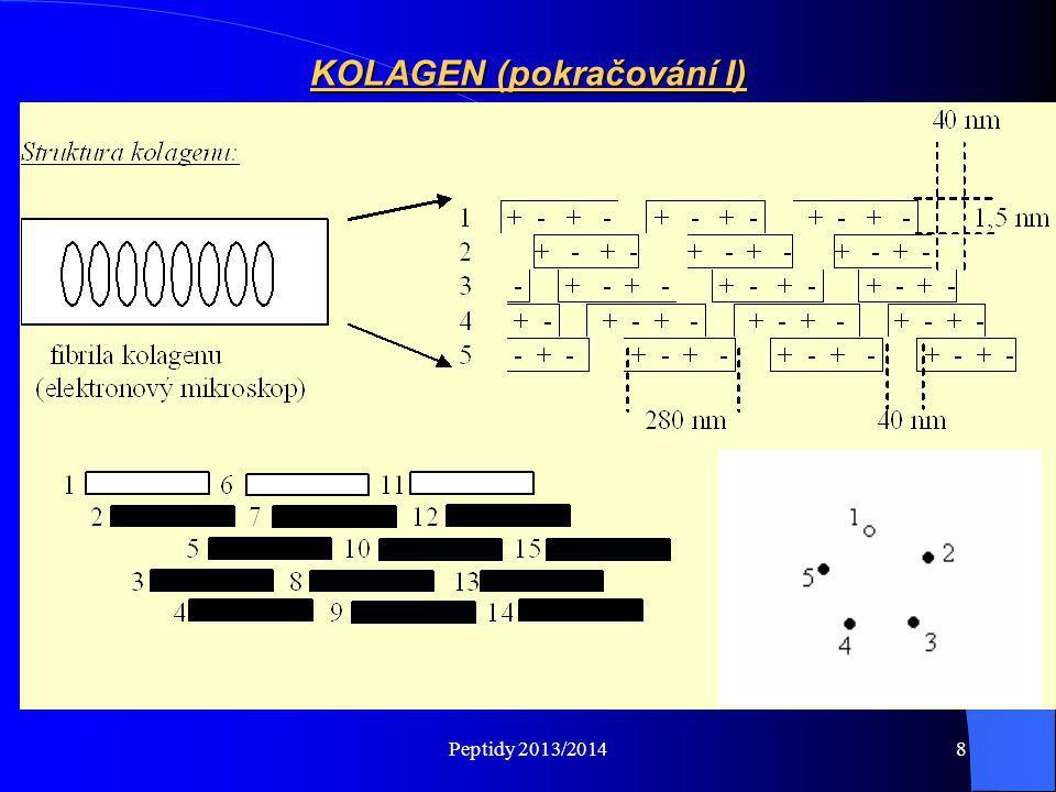 Peptidy 2013/20149 Trojitý helix kolagenu – prostorové uspořádání (pokračování II) Všechny tři řetězce jsou mezi sebou vázány vodíkovými můstky (.......).