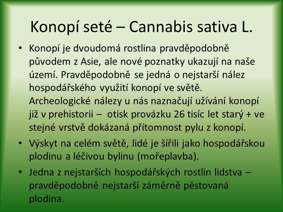 Dělení konopí • Kvůli masivnímu prokřížení dnes u nás rostou především hybridy původních odrůd a není tedy již platné dřívější dělení na odrůdy Cannabis sativa L.: • - sativa s nízkým obsahem THC pro hospodářské účely; • - indica s vyšším obsahem THC pro léčebné a rekreační využití.