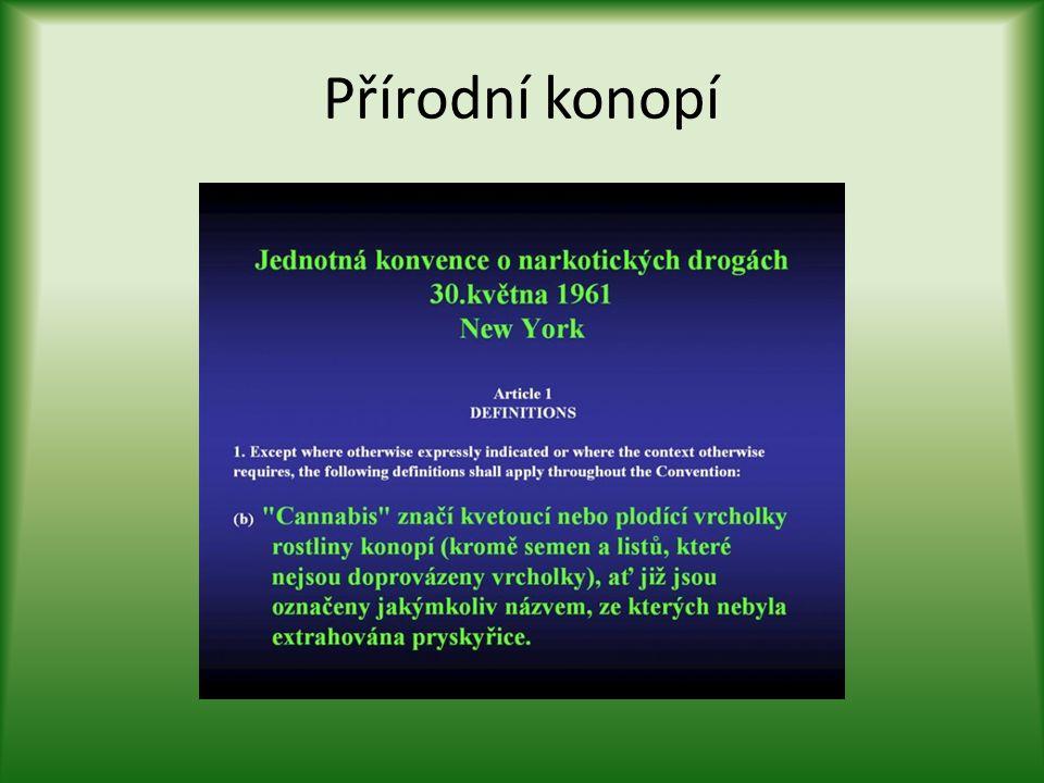 Přírodní konopí Léčebné účinky – současnost • Ničí rakovinové buňky a zachovává zdravé.