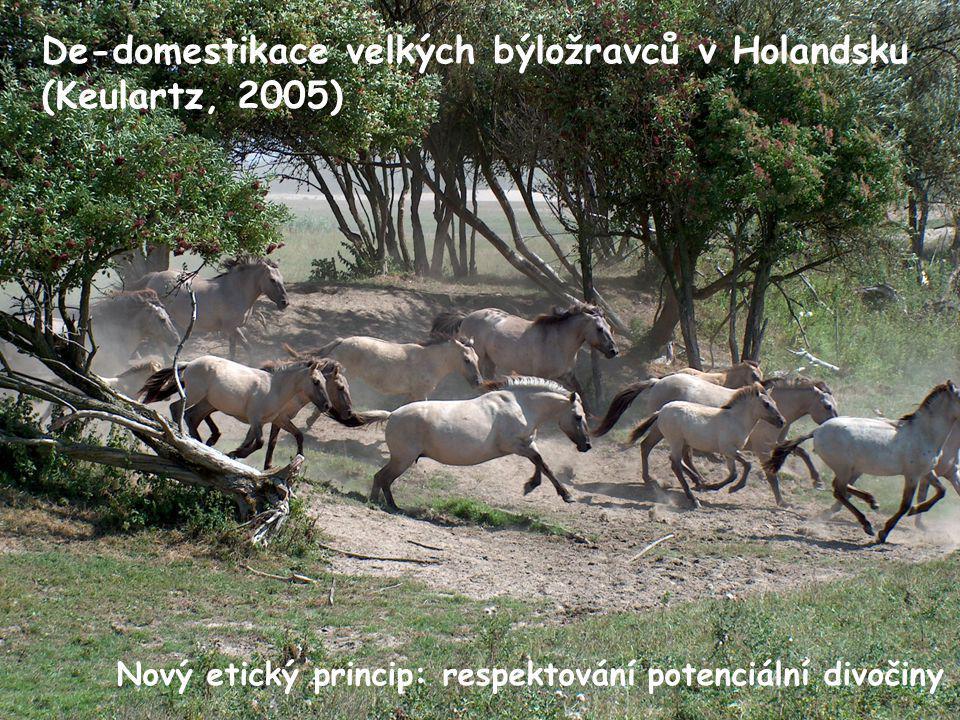 De-domestikace velkých býložravců v Holandsku (Keulartz, 2005) Nový etický princip: respektování potenciální divočiny
