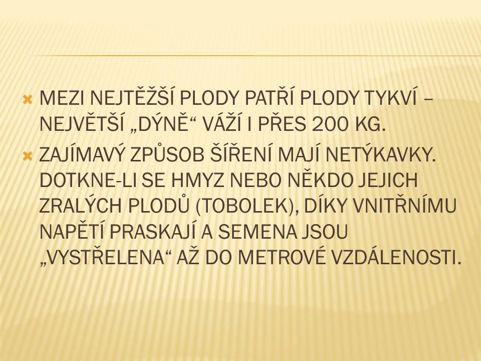 """ MEZI NEJTĚŽŠÍ PLODY PATŘÍ PLODY TYKVÍ – NEJVĚTŠÍ """"DÝNĚ VÁŽÍ I PŘES 200 KG."""