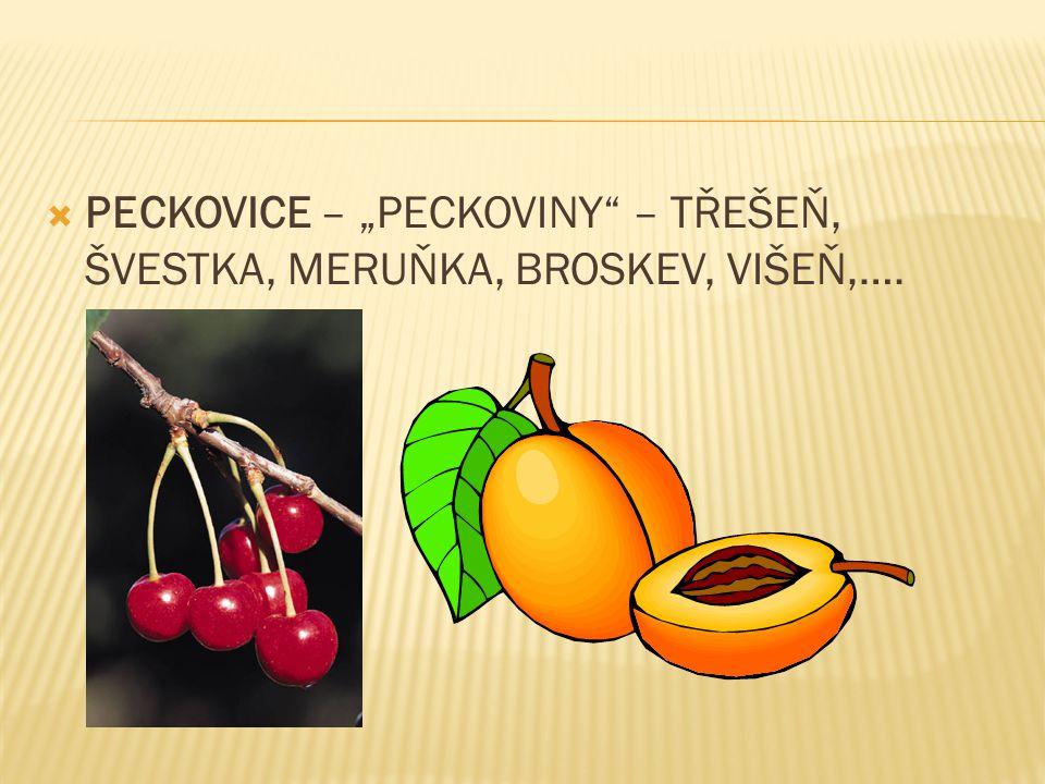 """ PECKOVICE – """"PECKOVINY – TŘEŠEŇ, ŠVESTKA, MERUŇKA, BROSKEV, VIŠEŇ,…."""