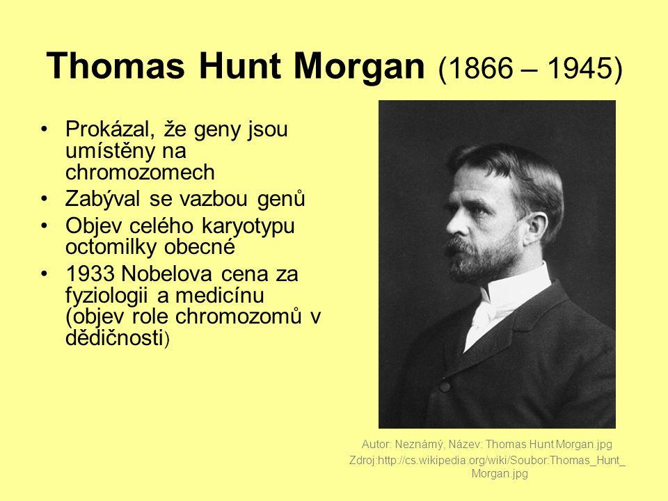 Thomas Hunt Morgan (1866 – 1945) •Prokázal, že geny jsou umístěny na chromozomech •Zabýval se vazbou genů •Objev celého karyotypu octomilky obecné •1933 Nobelova cena za fyziologii a medicínu (objev role chromozomů v dědičnosti ) Autor: Neznámý, Název: Thomas Hunt Morgan.jpg Zdroj:http://cs.wikipedia.org/wiki/Soubor:Thomas_Hunt_ Morgan.jpg