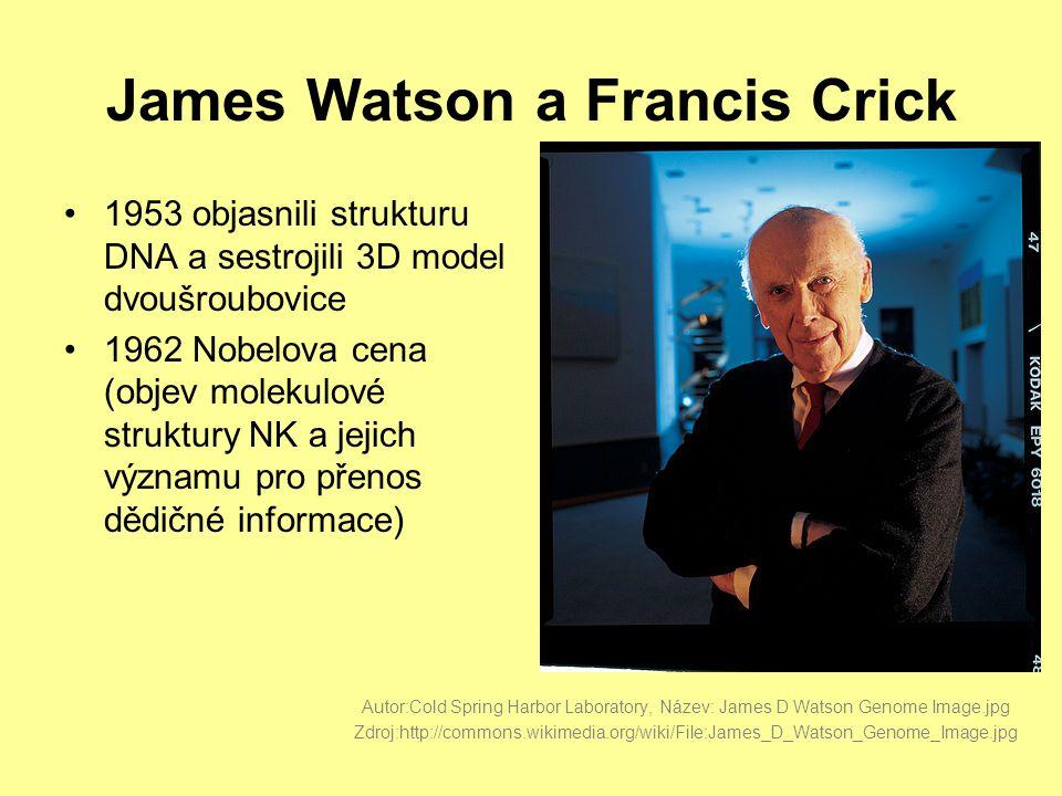 James Watson a Francis Crick •1953 objasnili strukturu DNA a sestrojili 3D model dvoušroubovice •1962 Nobelova cena (objev molekulové struktury NK a jejich významu pro přenos dědičné informace) Autor:Cold Spring Harbor Laboratory, Název: James D Watson Genome Image.jpg Zdroj:http://commons.wikimedia.org/wiki/File:James_D_Watson_Genome_Image.jpg