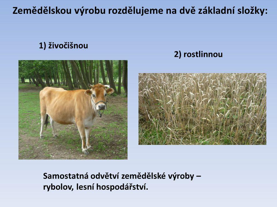 Zemědělskou výrobu rozdělujeme na dvě základní složky: Samostatná odvětví zemědělské výroby – rybolov, lesní hospodářství. 1) živočišnou 2) rostlinnou