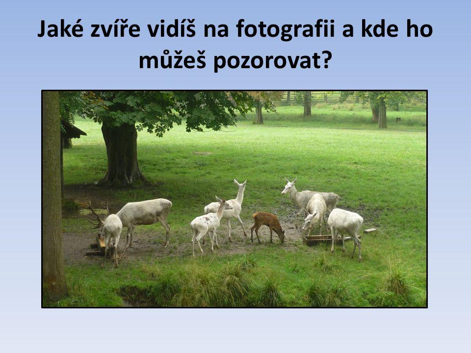 Jaké zvíře vidíš na fotografii a kde ho můžeš pozorovat?