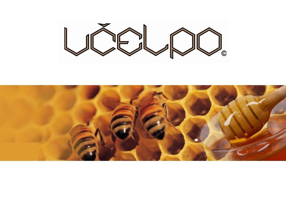 Obsah O společnosti BIO med Dědečkův med Dědečkova pochoutka Včelpo produkty – Apiglukan Včelpo produkty – Geleé Royale Včelpo produkty – Honey Vit API-GEMMO doplňky stravy Ostatní Včelpo produkty Certifikáty a ocenění Odkazy Včelí produkty Včelpo – šance pro naše zdraví