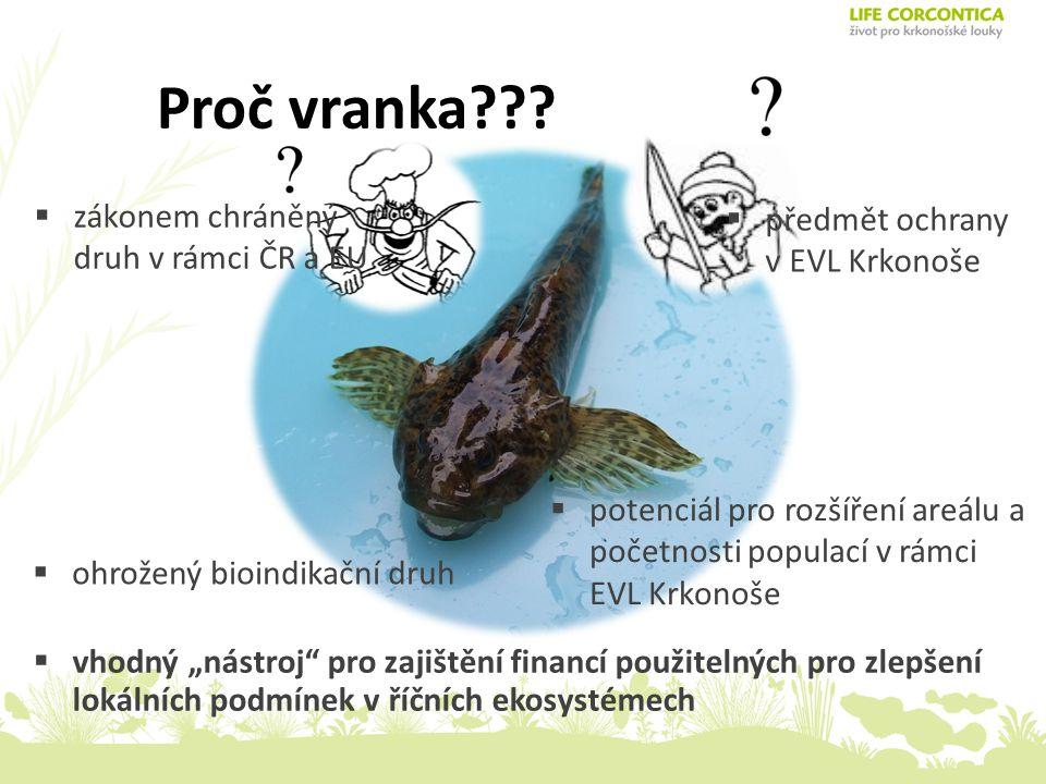 Vytváření podmínek pro podporu populací vranky obecné (Cottus gobio) v EVL Krkonoše Přednášející : Jiří KŘESINA
