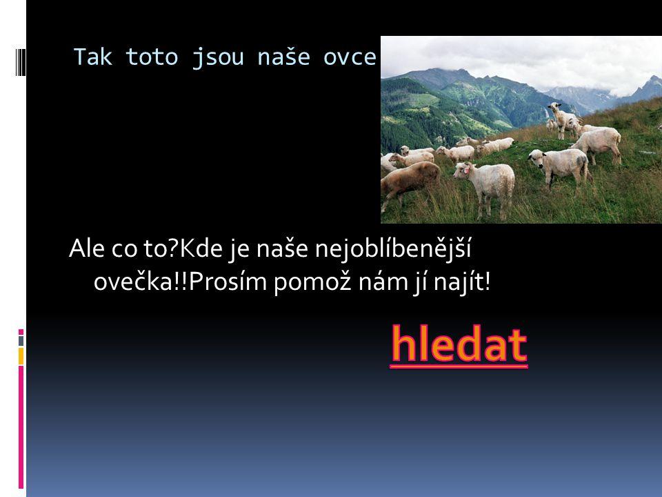 Tak toto jsou naše ovce: Ale co to?Kde je naše nejoblíbenější ovečka!!Prosím pomož nám jí najít!