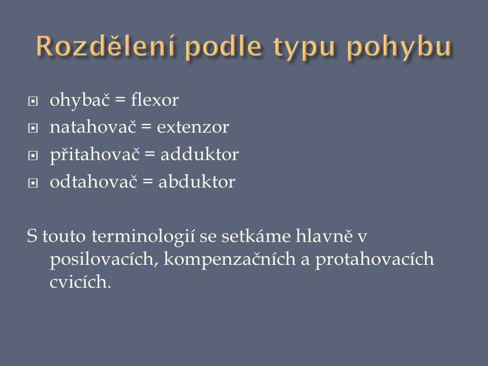  ohybač = flexor  natahovač = extenzor  přitahovač = adduktor  odtahovač = abduktor S touto terminologií se setkáme hlavně v posilovacích, kompenzačních a protahovacích cvicích.