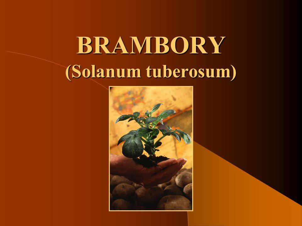 SOŠS a SOU KadaňOkopaniny - Brambory12 Příprava půdy pro brambory Prokypření ornice Orba