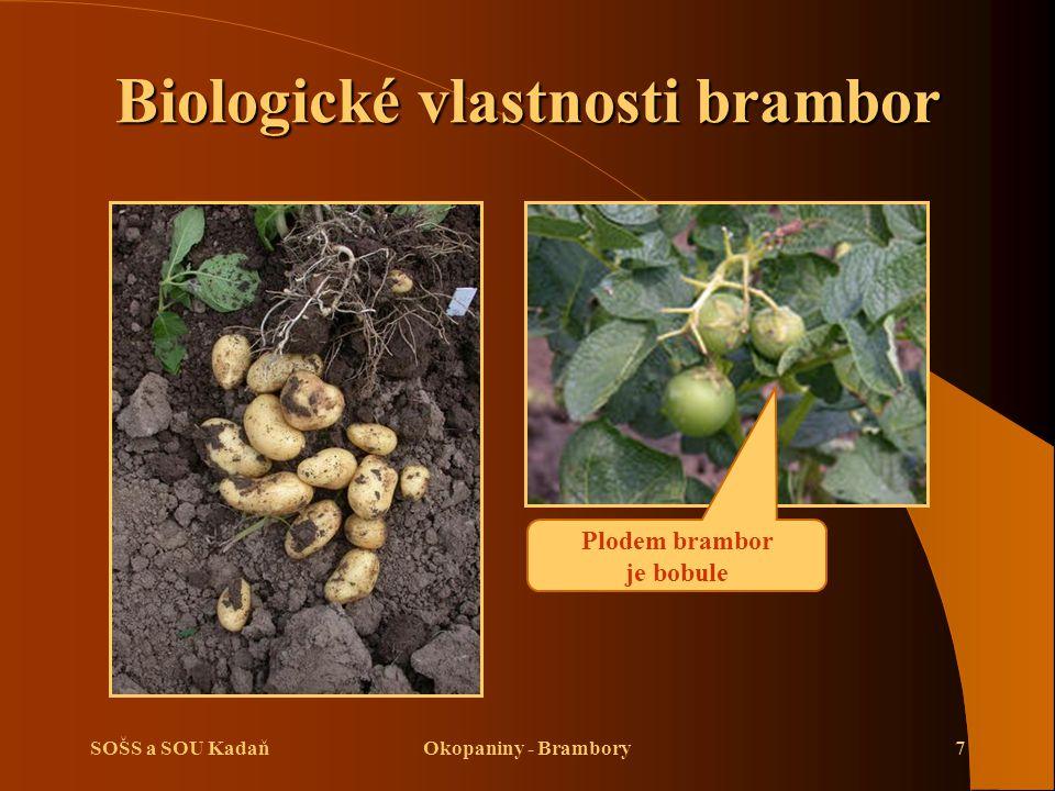 SOŠS a SOU KadaňOkopaniny - Brambory7 Biologické vlastnosti brambor Plodem brambor je bobule