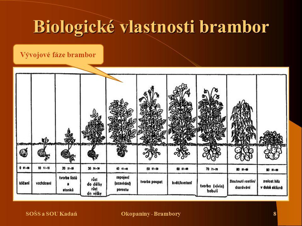 SOŠS a SOU KadaňOkopaniny - Brambory9 Nároky na prostředí brambor  Brambory vyžadují pro dobrý výnos hlíz 600–800 mm srážek za rok.