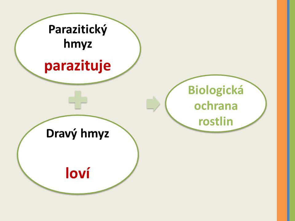 Parazitický hmyz parazituje Dravý hmyz loví Biologická ochrana rostlin