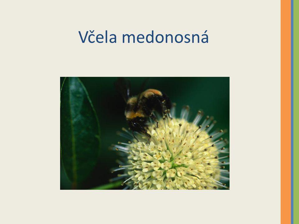 3.V čem spočívá užitek dravého hmyzu pro rostliny.