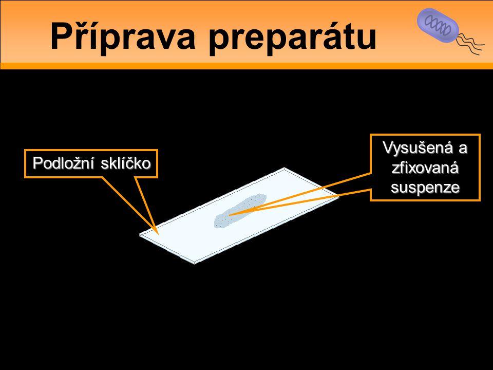 Podložní sklíčko Vysušená a zfixovaná suspenze Příprava preparátu