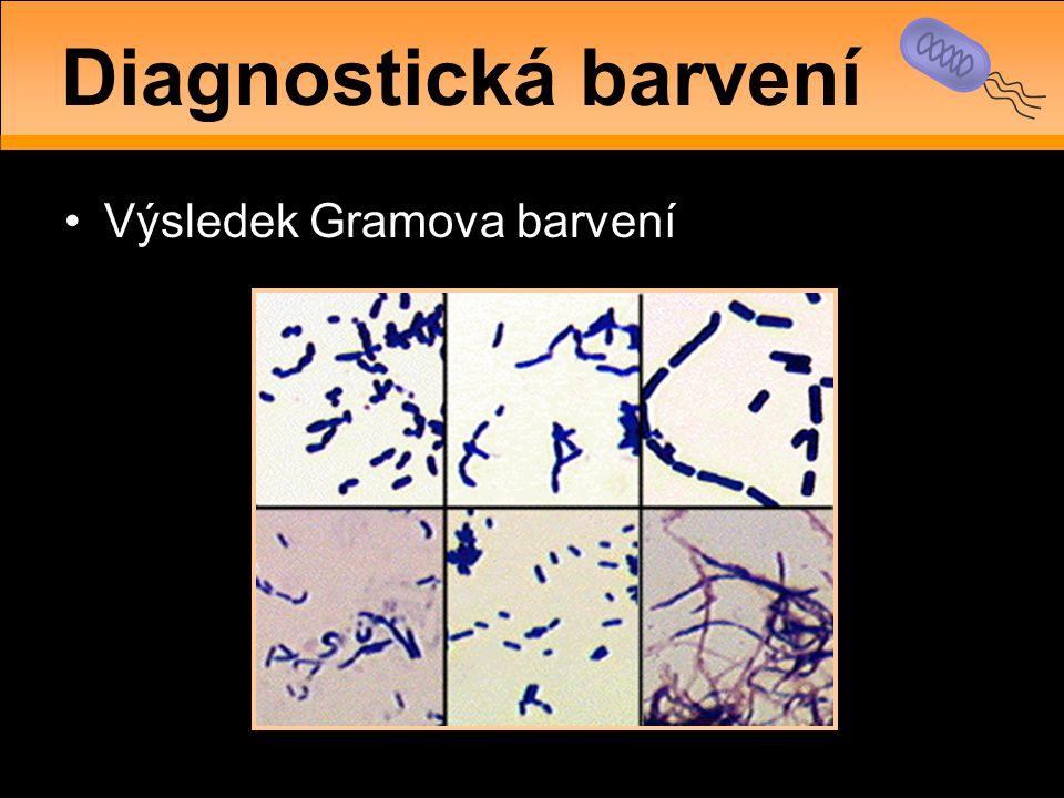 •Výsledek Gramova barvení Diagnostická barvení